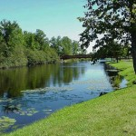 grassy_river_bank